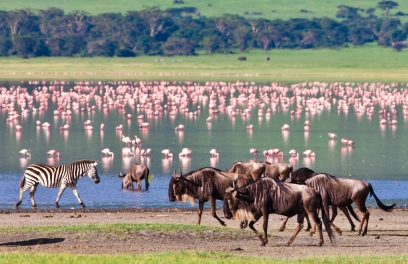 El juego de las palabras encadenadas-http://www.panavision-tours.com/viajes/tanzania-turismo/tanzania.jpg